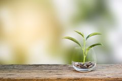 Investment concept. Growth plant on coins in clear glass bottle Royalty Free Stock Photography