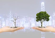 Investment concept plant Investment concept plant stock photos