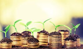 Investment growth stock images