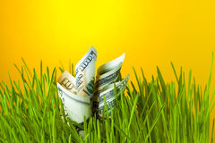 Investment growth: dollar bills in green grass. Stock Images