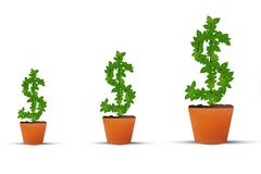 Investment Money Growth, Dollar Money Plant Symbol. Investment money growth steps mutual funds,share market, gold etc. US dollar symbol on isolated white Royalty Free Stock Photography