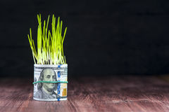 Investment growth: green grass and dollar bill