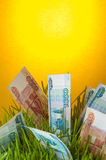 Investment growth: russian ruble bills in green grass Stock Photo