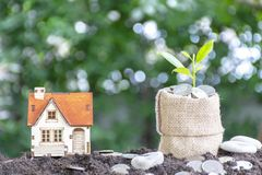 Investment on housing, Plant growth is comparable to financial growth, royalty free stock photography