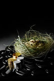 Investment Nest Egg II Stock Photos