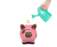 Investment with piggy bank Stock Images