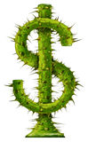 Investment Risk. And protecting your wealth represented by a dollar symbol made of growing thorn plant with protective painful needles as symbols of financial Royalty Free Stock Image
