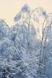 Invierno, árboles en la nieve Imágenes de archivo libres de regalías