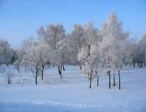 Invierno. Árboles escarchados en el parque Imagen de archivo