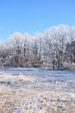 Invierno. Foto de archivo
