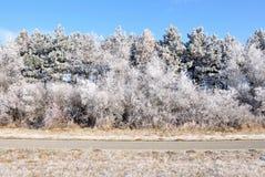 Invierno. Imagen de archivo libre de regalías
