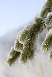 Invierno Imagen de archivo libre de regalías