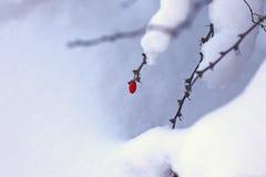 Invierno Imagenes de archivo