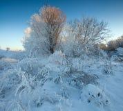 Invierno Foto de archivo libre de regalías