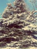 Invierno 2014 Fotografía de archivo