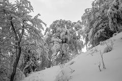 Invierno, Foto de archivo libre de regalías