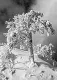 Invierno, Imagen de archivo libre de regalías