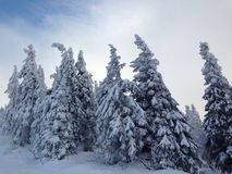 Invierno Foto de archivo