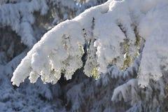 Invierno asoleado foto de archivo