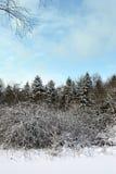 Invierno asoleado Foto de archivo libre de regalías