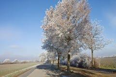 Invierno bávaro, camino rural con los árboles helados Foto de archivo libre de regalías