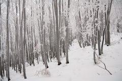 Invierno blanco en bosque Imágenes de archivo libres de regalías