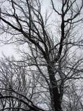Invierno con nieve que cae Fotos de archivo libres de regalías