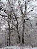 Invierno con nieve que cae Imagen de archivo