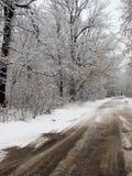 Invierno con nieve que cae Fotos de archivo