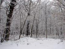 Invierno con nieve que cae Fotografía de archivo libre de regalías