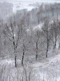 Invierno con nieve que cae Imagen de archivo libre de regalías
