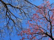 Invierno contra la primavera Foto de archivo