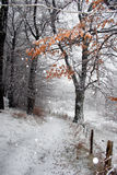 Invierno danés Fotografía de archivo libre de regalías