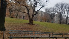 Invierno 2019 de Central Park fotografía de archivo