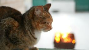 Invierno de la chimenea del gato almacen de video