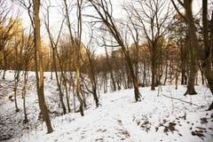 Invierno de la nieve Foto de archivo