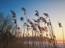 Invierno de la puesta del sol Imágenes de archivo libres de regalías