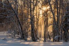 Invierno de la puesta del sol del sol de las nevadas del bosque Fotos de archivo