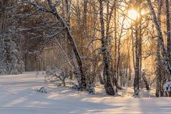 Invierno de la puesta del sol del sol de las nevadas del bosque Foto de archivo