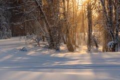 Invierno de la puesta del sol del sol de las nevadas del bosque Foto de archivo libre de regalías