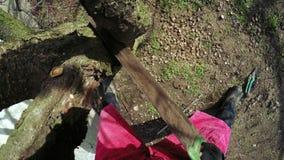 Invierno de los árboles de la poda metrajes