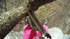 Invierno de los árboles de la poda almacen de metraje de vídeo