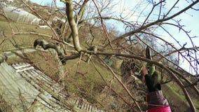 Invierno de los árboles de la poda almacen de video