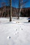 Invierno de Nueva Inglaterra Imagen de archivo