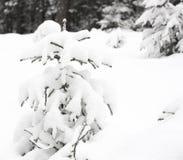 Invierno del árbol Fotografía de archivo libre de regalías