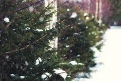 Invierno del árbol de abeto Foto de archivo libre de regalías