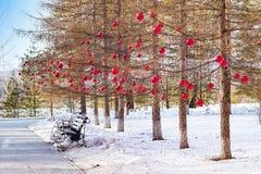 Invierno del alerce en el parque con la calzada y los bancos, adornados a las bolas de cristal rojas de la Navidad, Imagen de archivo libre de regalías