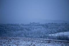 Invierno del bosque Imagen de archivo