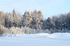 Invierno del bosque con un camino estrecho Imagen de archivo libre de regalías