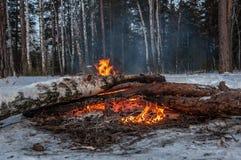 Invierno del bosque de la leña de la hoguera Foto de archivo